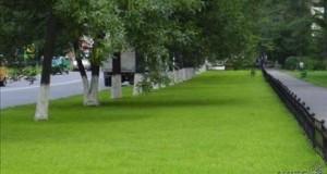 Роспотребнадзор выпишет штраф одной из фирм, занимающихся озеленением Петербурга