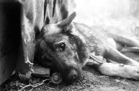 Санкт-Петербург борется с бездомными животными