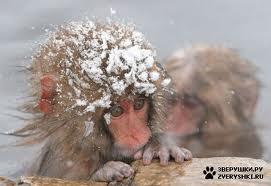 МЧС прогнозирует резкое похолодание.