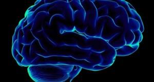 Разночастотные мозговые волны помогают обучаться новому
